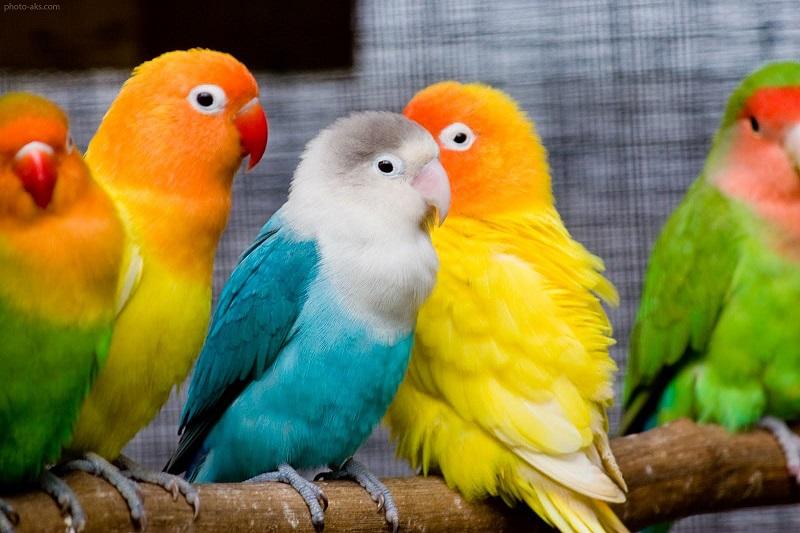 گروههای حیوانات تلگرام